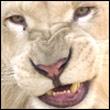 avatar 2533