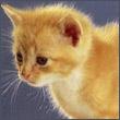 avatar 359
