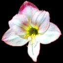 fleurs 00