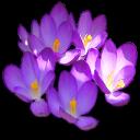 fleurs 01