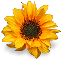fleurs 04