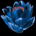 fleurs 05