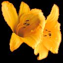 fleurs 06