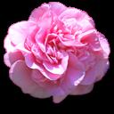fleurs 08