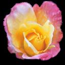 fleurs 26