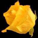 fleurs 28