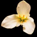 three petal